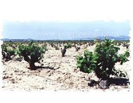 百利纳贝纳瓦罗酒庄(Bernabe Navarro)
