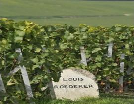路易王妃(Louis Roederer)